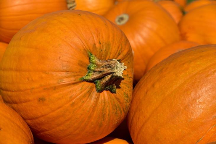Какой сегодня праздник: 11 ноября 2019 года