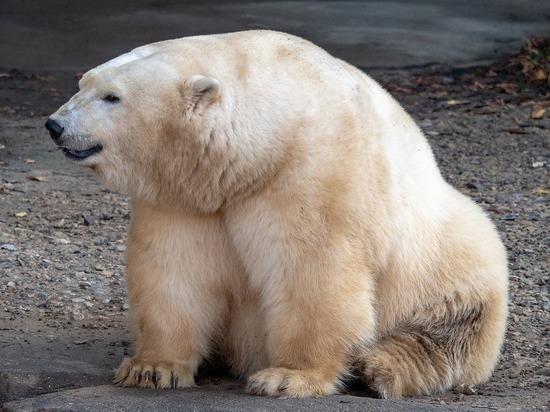 Роснефть защитит животных Арктики