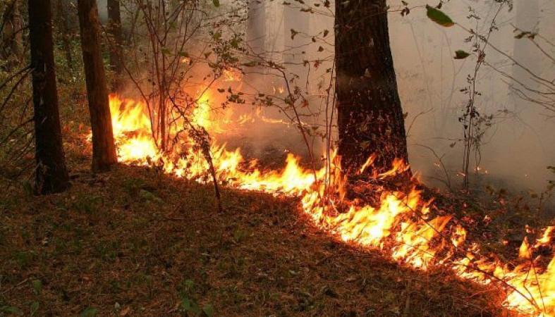 Более 25 гектаров леса сгорело в Карелии за несколько дней