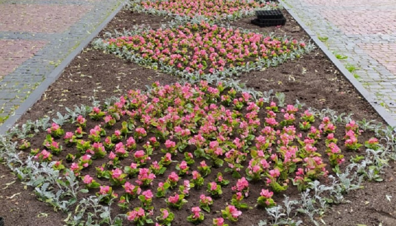 Клумбы Петрозаводска украшают цветами