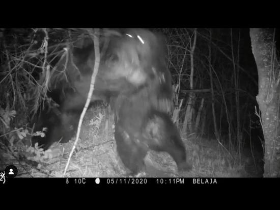 Медведи подрались и сломали забор на российско-китайской границе
