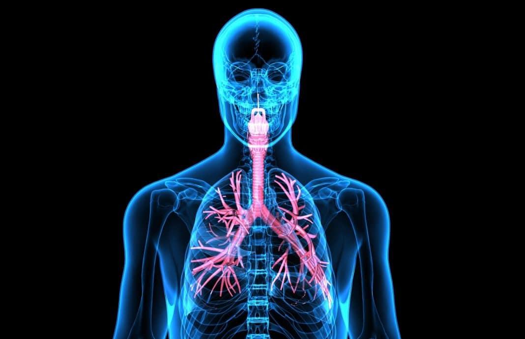 6 продуктов для здоровья дыхательной системы