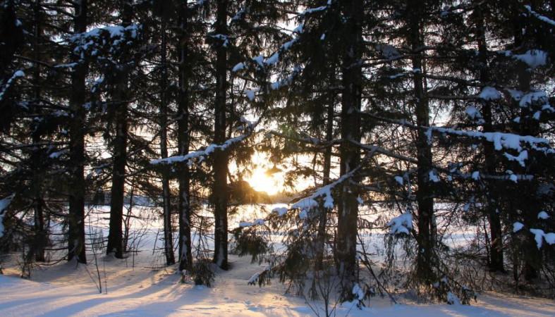Жители села Шелтозеро не хотят отдавать под вырубку свой лес