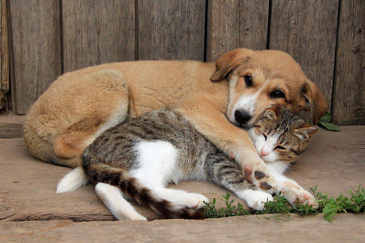 Регистрация домашних животных станет обязательной