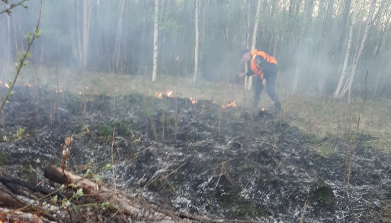 Лес загорелся в Беломорске из-за замыкания